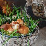 Sezon na grzyby – od zbioru do marynaty